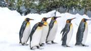 日本北海道旭山動物園